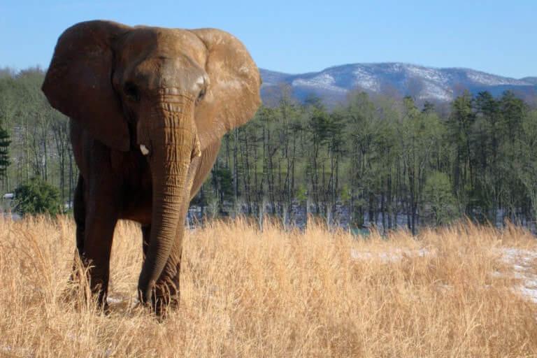 elephant at zoo