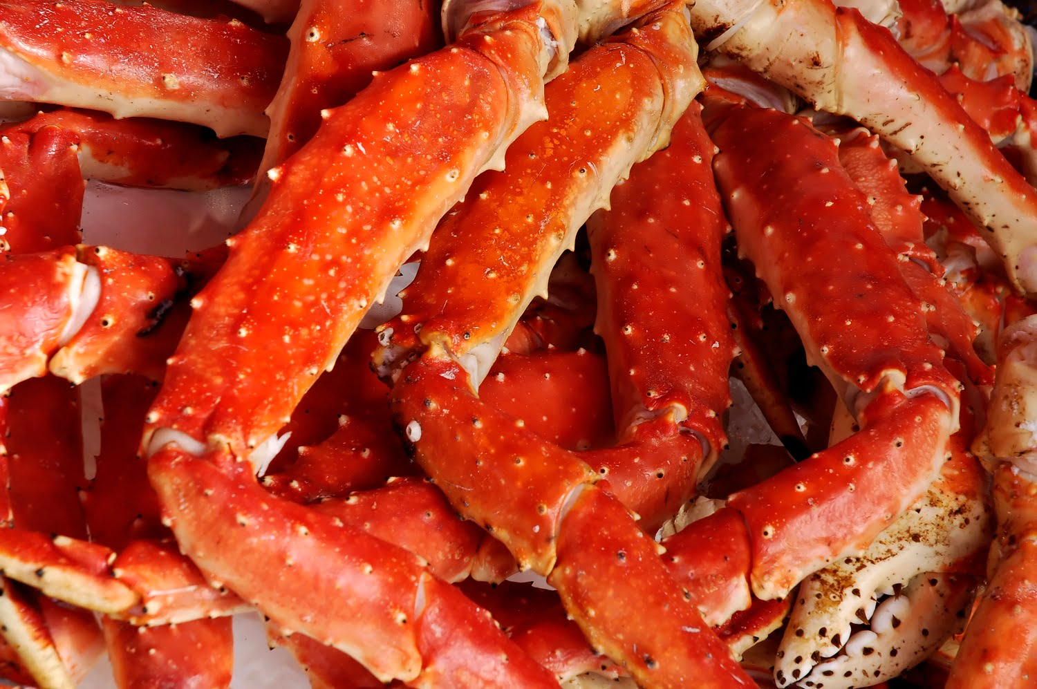 Crab legs at the Colonial Dining Rom seafood buffet
